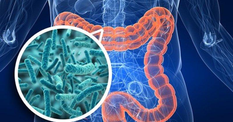 безопасное средство от паразитов в организме человека